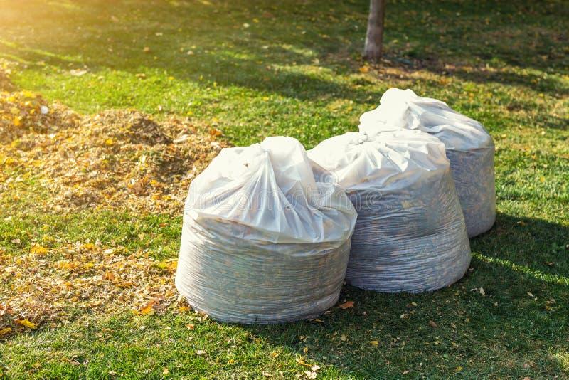 Pile des feuilles tombées jaunes et oranges rassemblées en grands sachets en plastique blancs sur la pelouse d'herbe verte à l'ar photographie stock libre de droits