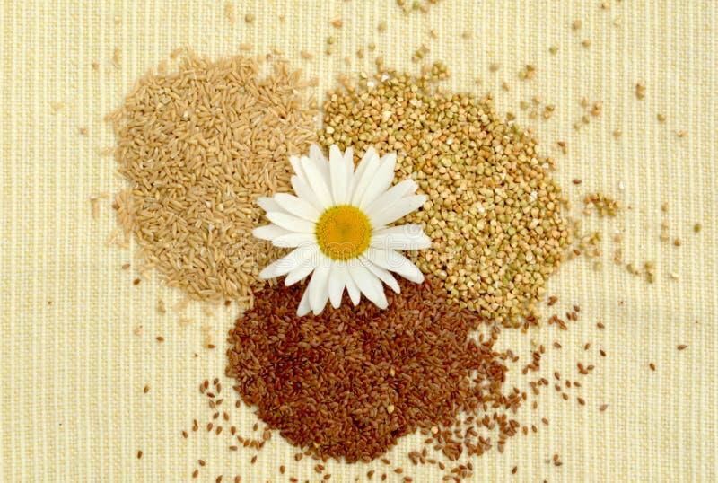 Pile des graines de céréale, gruau sur un fond clair, avoine, lin, sarrasin, sarrasin vert, superfoods, nourriture saine, vegan,  photos stock
