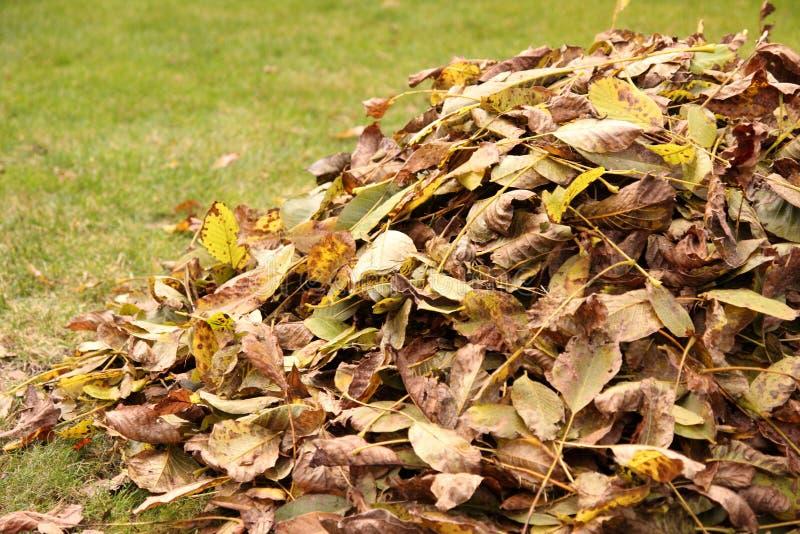 Pile des lames d'automne photos libres de droits