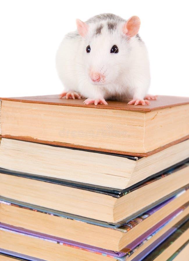 Pile des livres et du rat photographie stock