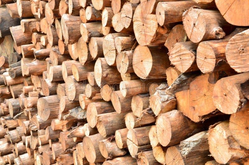 Pile des logarithmes naturels en bois photo libre de droits
