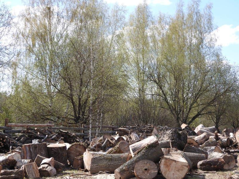 Pile des logarithmes naturels en bois pr?ts pour l'hiver image libre de droits