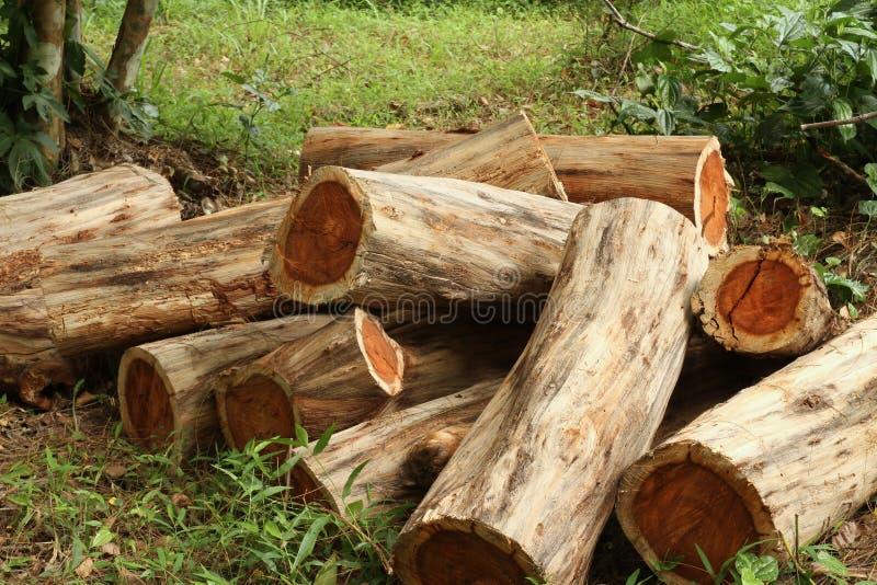 Pile des rondins en bois images libres de droits