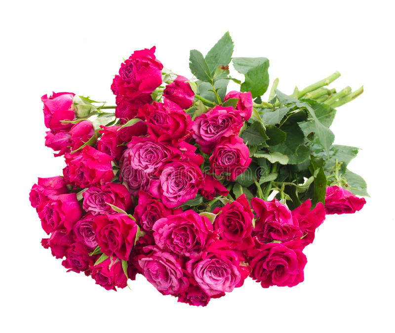 Pile des roses mauve fraîches images libres de droits