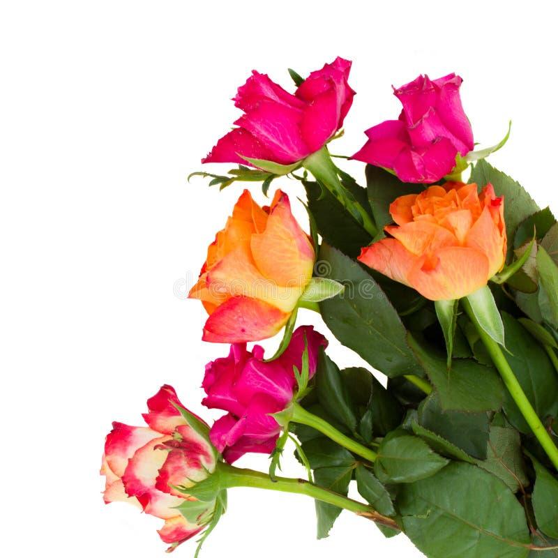 Pile des roses oranges et mauve photos stock