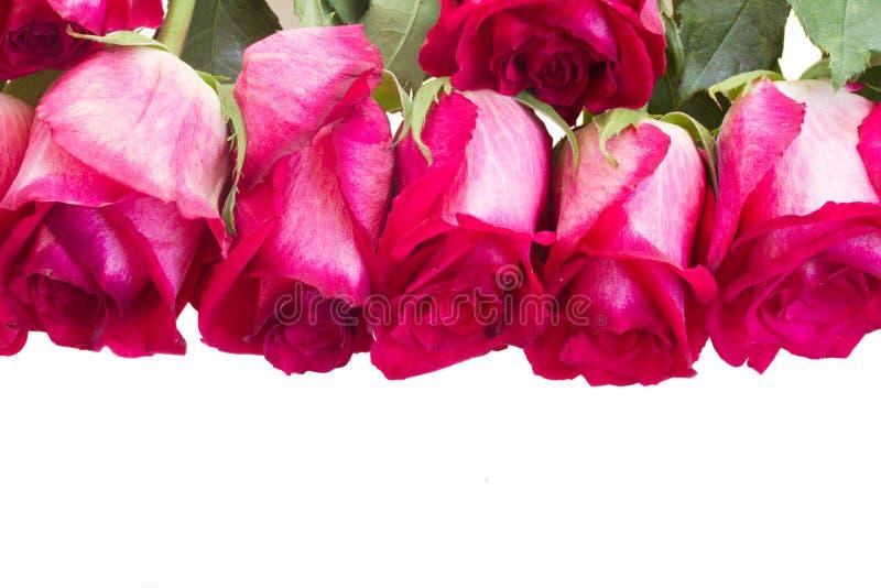 Pile des roses roses photos libres de droits