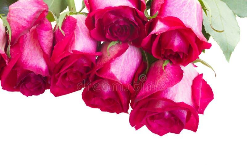Pile des roses roses photo libre de droits
