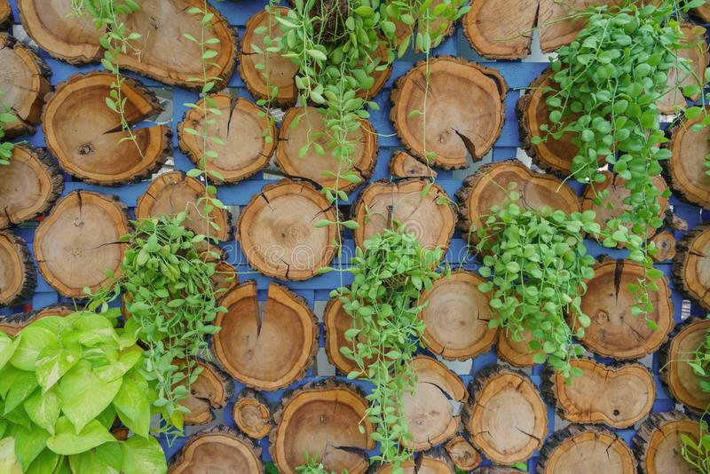 Pile des tronçons d'arbre texture ou de la structure en bois pour le fond photographie stock libre de droits