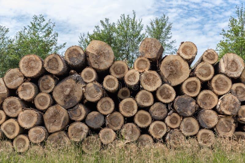 Pile des troncs d'arbre dans la forêt photo libre de droits