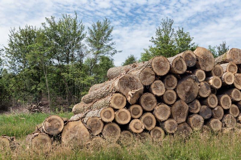 Pile des troncs d'arbre dans la forêt image libre de droits