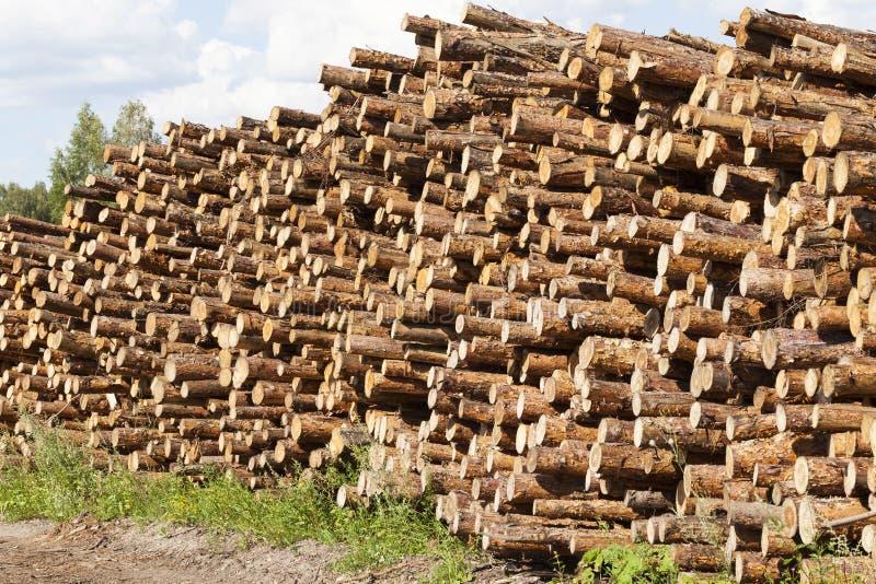 pile des troncs de pin photo stock
