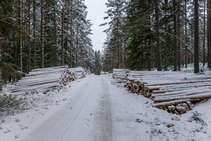 Pile di legname lungo una strada di inverno in Svezia immagini stock