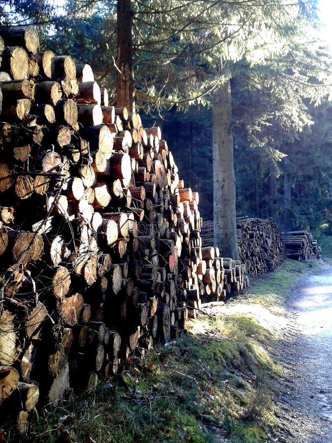 Pile di legname nel legno immagine stock libera da diritti