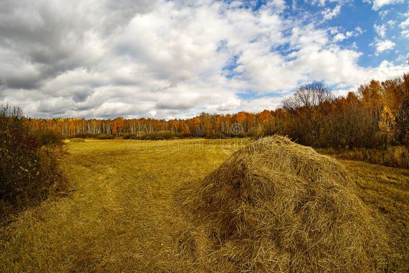 Pile di paglia dopo il raccolto in autunno immagine stock