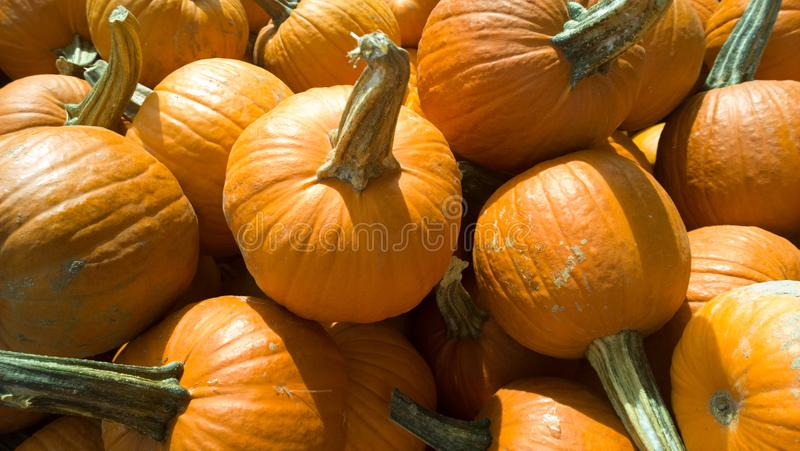 Pile di Pumpkins immagine stock libera da diritti