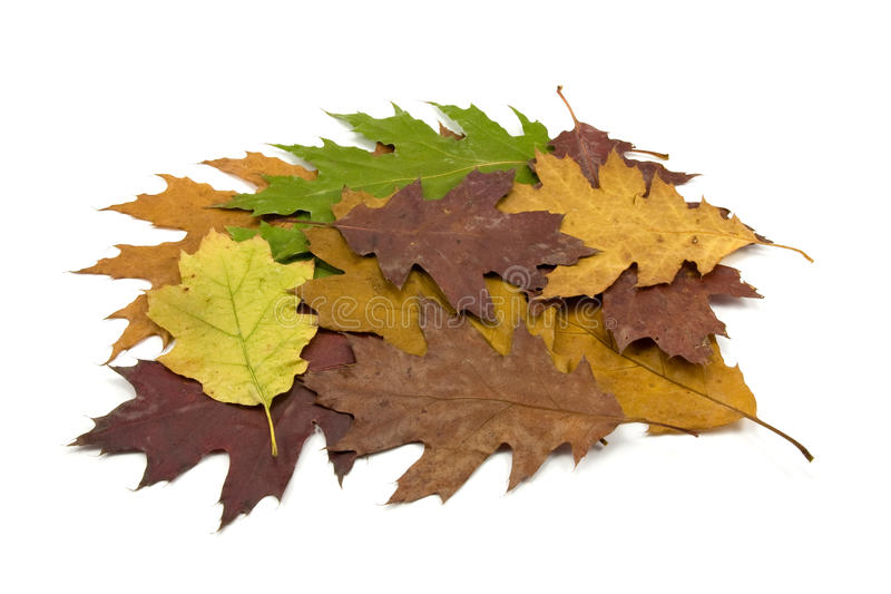 Pile of dirty fallen leaves royalty free stock image