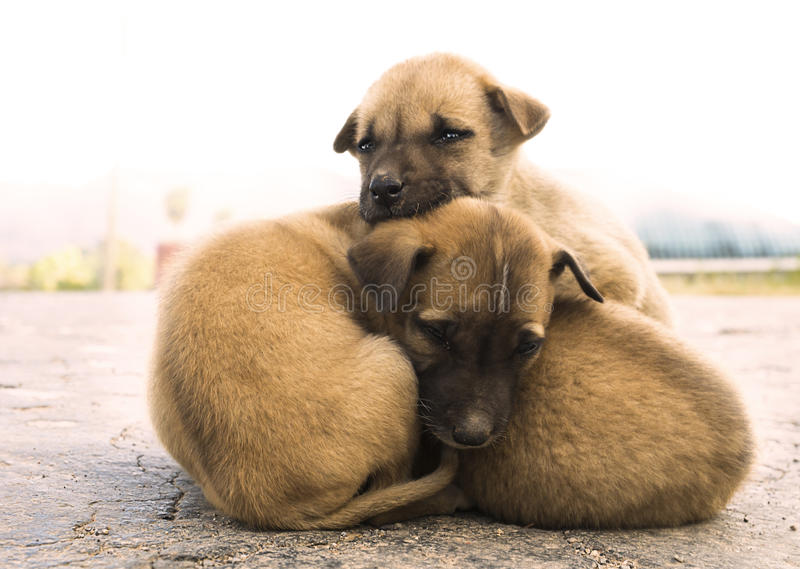 Pile of dogs. Pile of cute dog, friends forever, Kalaw, Myanmar stock photography