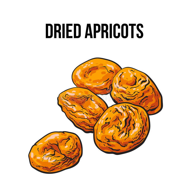 Pile of dried apricots, sketch style, hand drawn vector illustration. Pile of dried apricots, sketch style vector illustration isolated on white background royalty free illustration