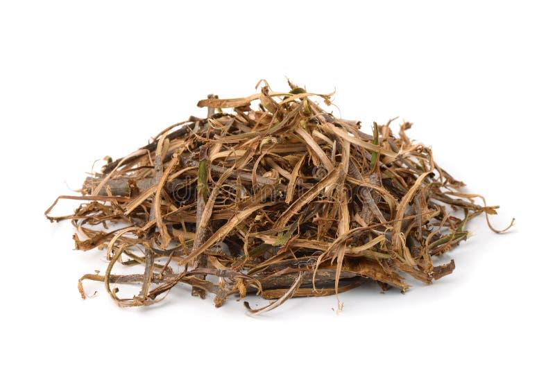 Pile of dried oak bark royalty free stock image