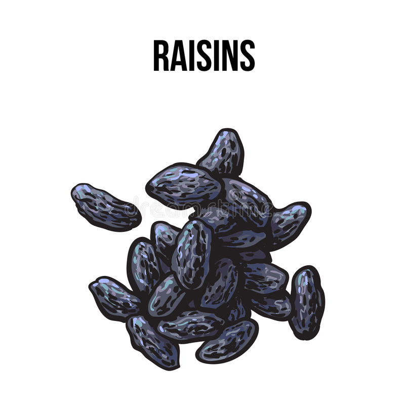 Pile of dried raisins, sketch style, hand drawn vector illustration. Pile of dried black raisins, sketch style vector illustration on white background. Drawing royalty free illustration