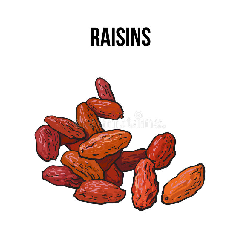 Pile of dried raisins, sketch style, hand drawn vector illustration. Pile of dried raisins, sketch style vector illustration on white background. Drawing of red royalty free illustration