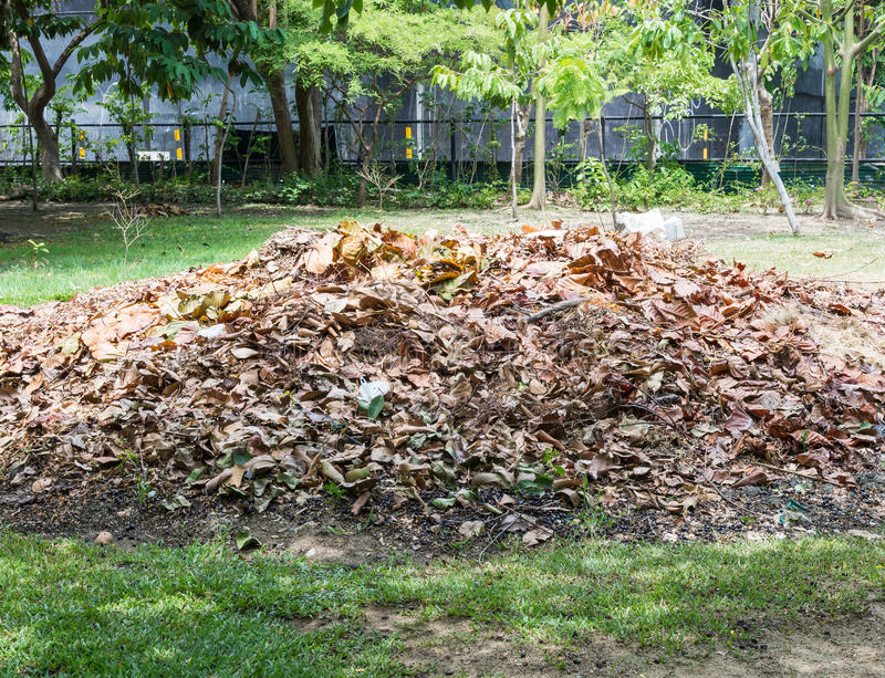 Pile of the dry leaves. royalty free stock photo