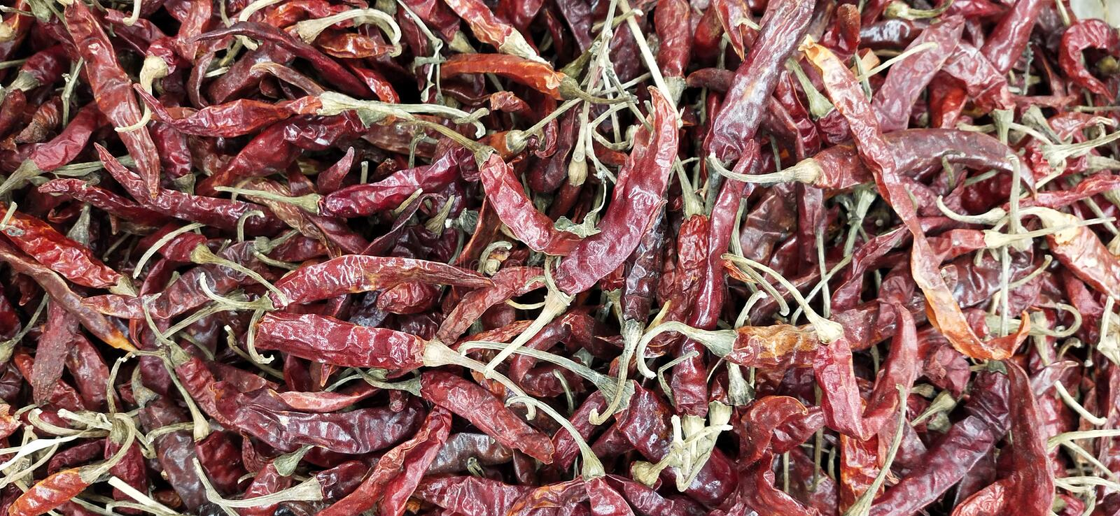 Pile of dry red hot and spicy chillies stock photo