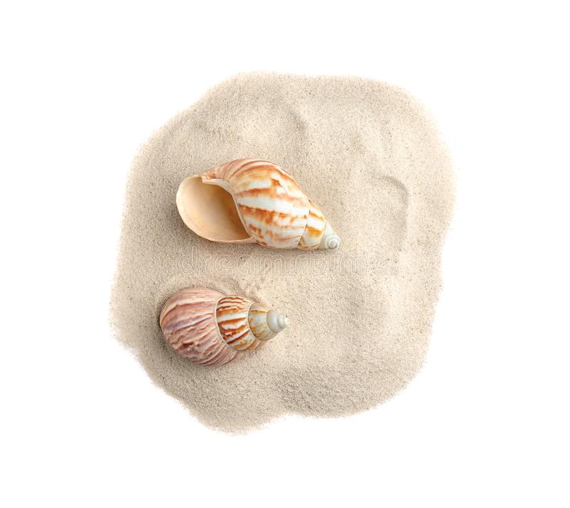 Pile du sable de plage avec des coquilles de mer sur la vue blanche et supérieure photos stock