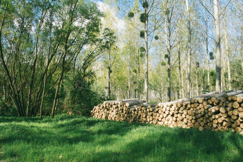 Pile en bois dans la forêt images libres de droits