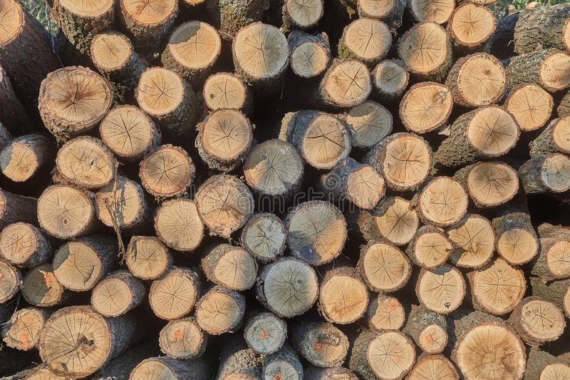 Pile en bois de rondin image stock