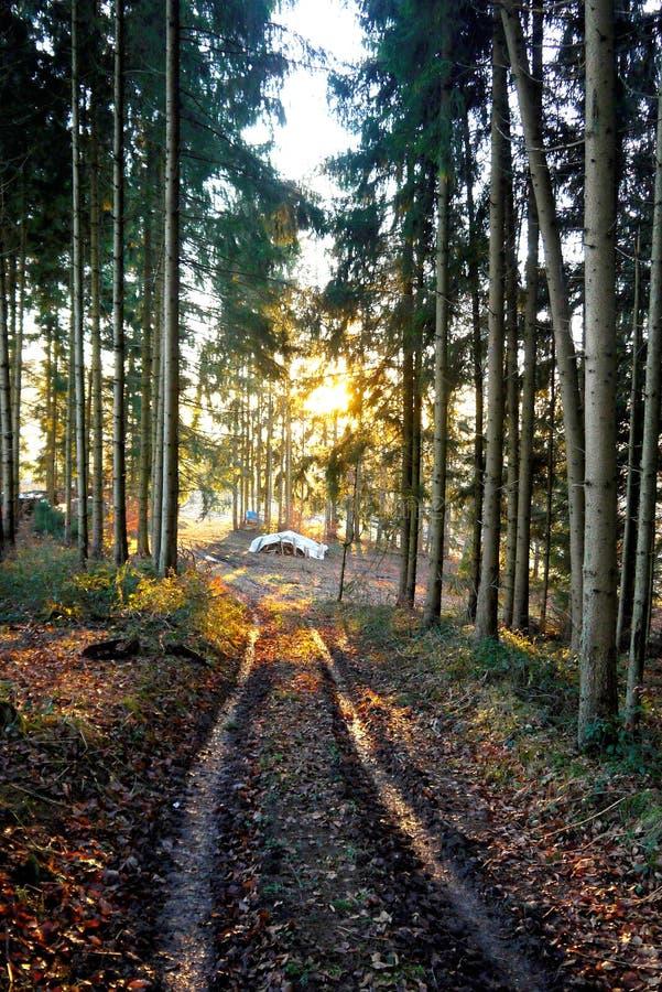 Pile en bois en bois images libres de droits