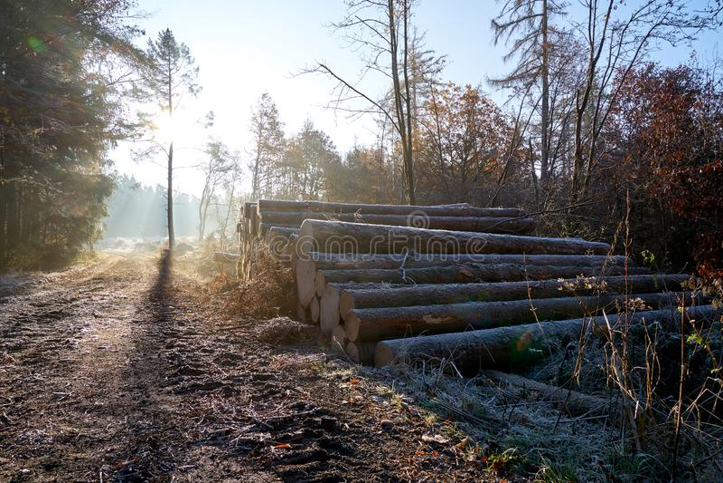 Pile en bois sur le côté de la route photos libres de droits
