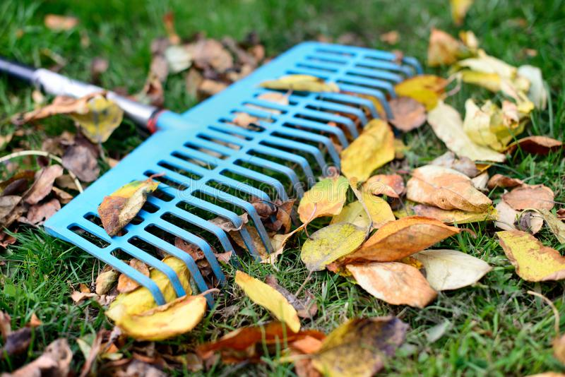 Pile of fall leaves with fan rake on a lawn stock images