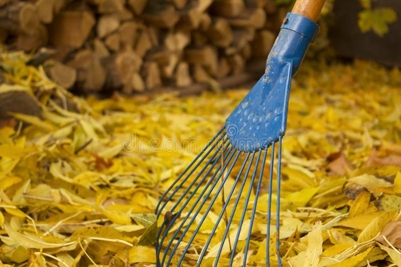 Pile of fall leaves with fan rake on lawn royalty free stock photo