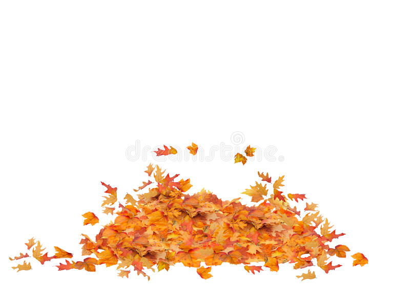 Pile of Fall Leaves Isolated. Orange, red, yellow, and brown colors.Leaf Pile royalty free stock image