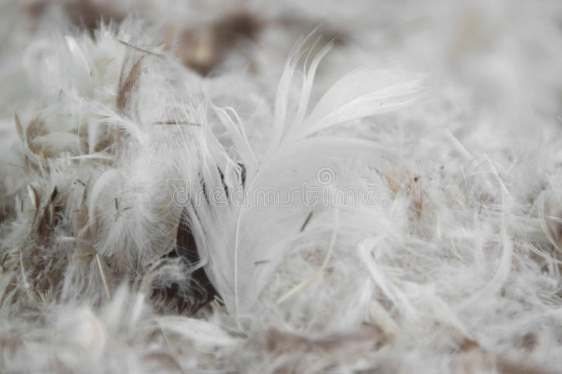Pile of feathers. The pile of fluffy feathers. The plumage in close-up view stock photo