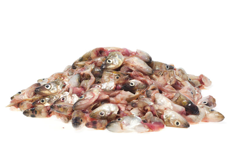 Pile of fish heads royalty free stock image
