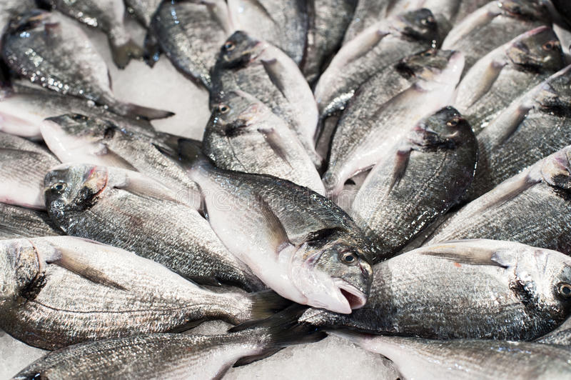 Download Pile of fish stock photo. Image of food, gray, up, market - 31368558