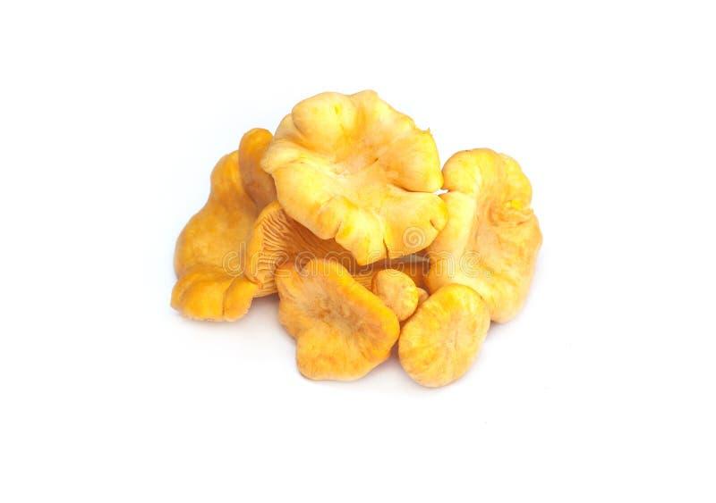 Pile fraîche de chanterelles de champignon de forêt sur le fond blanc photographie stock