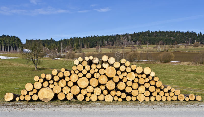 Pile of fresh cut logs. At a landscape in spring royalty free stock image