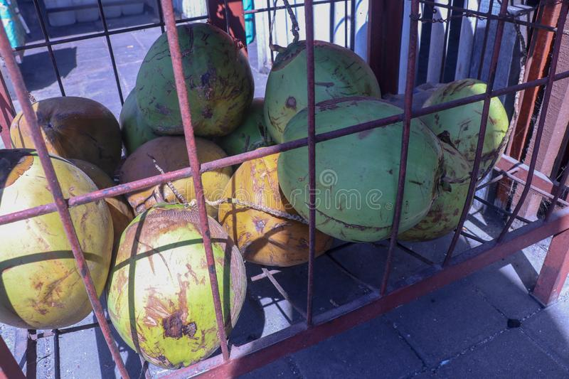 Pile of fresh green coconuts in wire cage. Young coconut. Market hall on Bali island in Indonesia. Fresh drink sale. Healthy drink. Pile of fresh green coconuts royalty free stock images