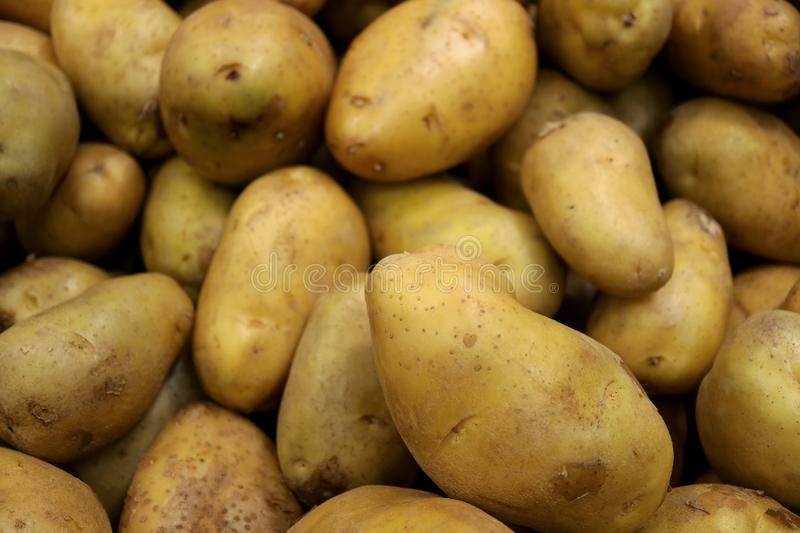 Pile of Fresh Law Potatoes with Selective Focus. Food Texture Background abundance agriculture banner brown carbohydrate close closeup cooking crop delicious stock images