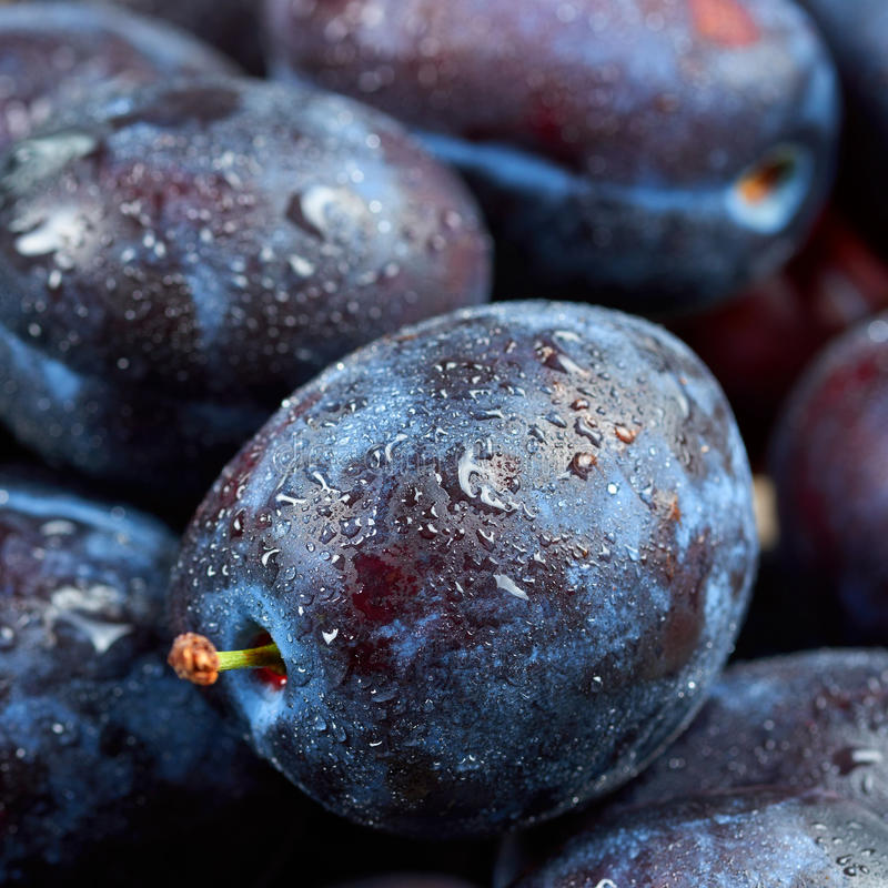 Download Pile of fresh plums stock photo. Image of health, breakfast - 80415882