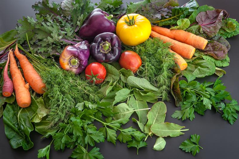 A pile of fresh produce including carrots, peppers, tomatoes, dill, parsley and sorrel. A cornucopia of freshly harvested produce including carrots, purple stock photos