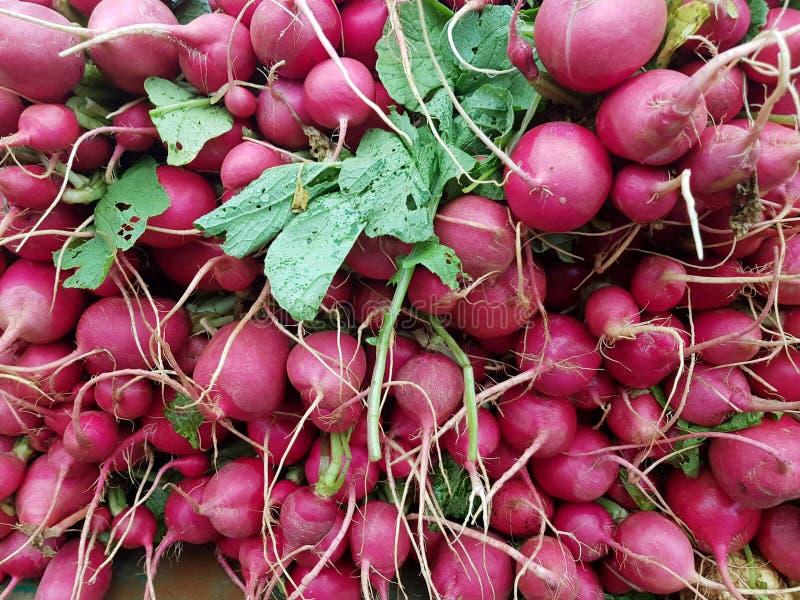 A pile of fresh radishes on the market stock image