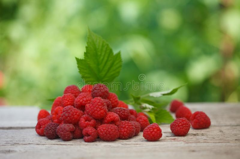 Pile of fresh Red raspberries with raspberry leaf on old wooden table, royalty free stock photos