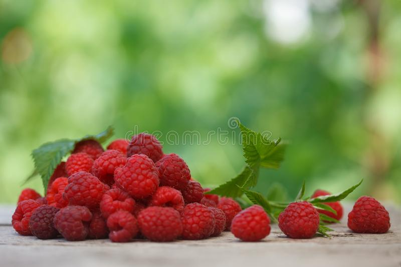 Pile of fresh Red raspberries with raspberry leaf on old wooden table, royalty free stock photo