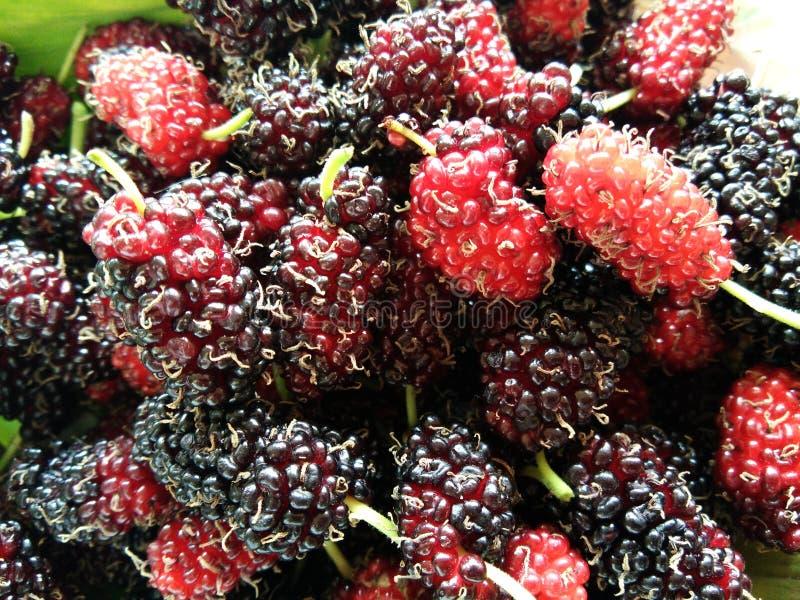Pile of fresh ripe mulberry fruits. Closeup pile of fresh ripe mulberry fruits stock images