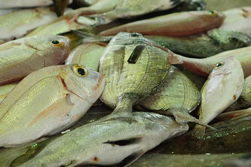 Pile of fresh sea fish dispayed on fish market royalty free stock image