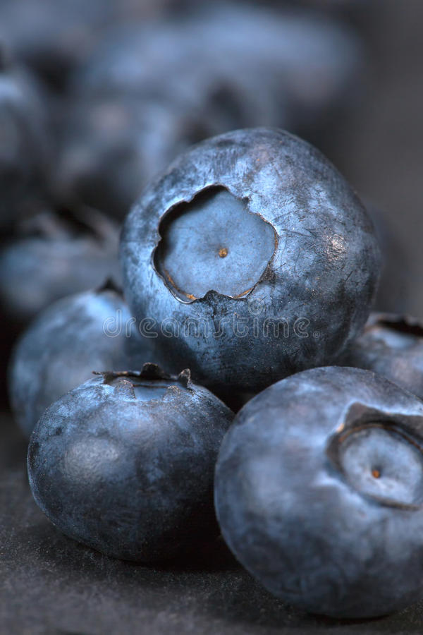 Pile of freshly picked blueberries royalty free stock photography